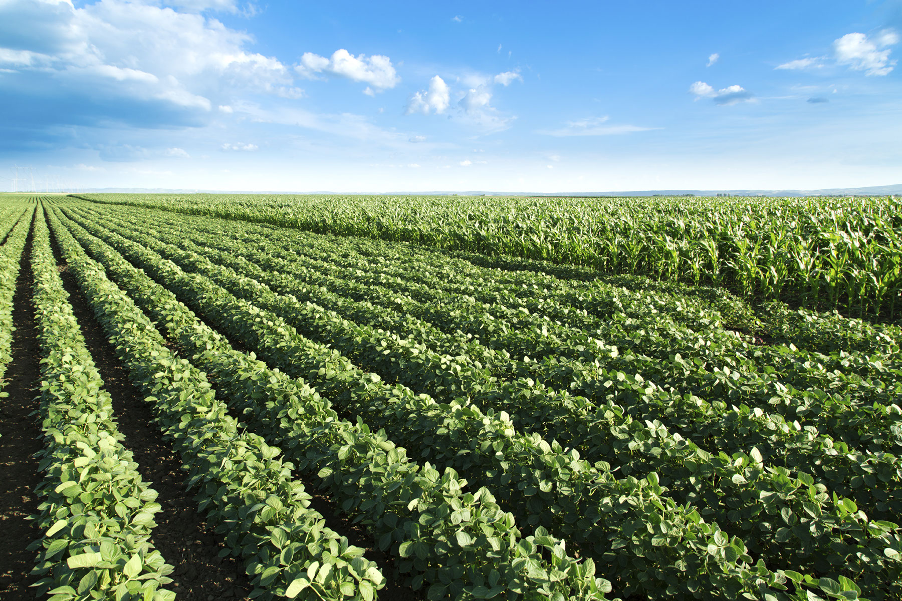 How to Invest in Agricultural Real Estate in Illinois pictures
