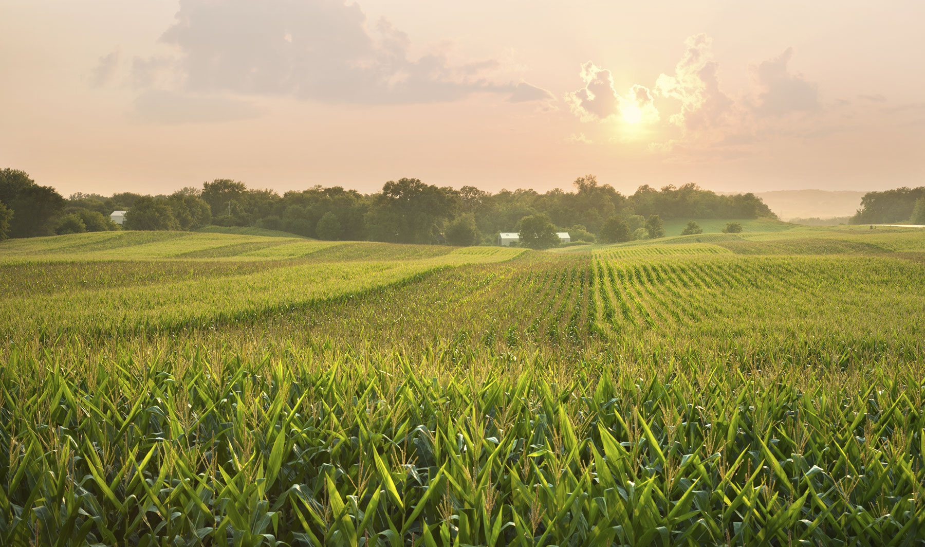 How to Invest in Agricultural Real Estate in Illinois advise